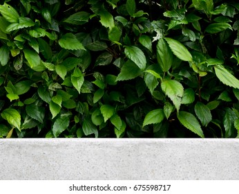 Green leaves background with a space of white stone bench for montage product display