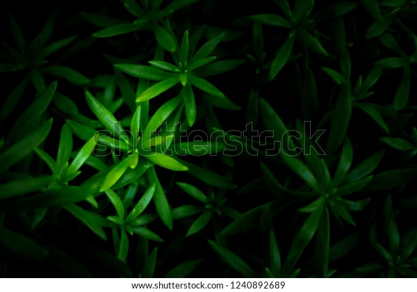 Green Leaves Background Wallpaper Backdrop Natural Stock Photo