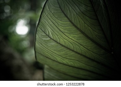 green leaves background wallpaper, texture of leaf, leaves with space for text