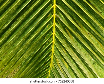 Green Leaves background, walls texture Ideal for use in the design fairly.