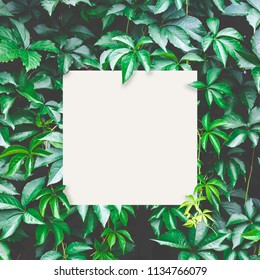 Green leaves background with white paper card for your text; Nature concept