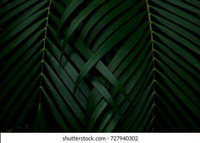 Green leaves background.Green leaves with copy space.They are color tone dark in the morning.Tropical Plant in Thailand,environment,good air,fresh.photo concept nature and plant.