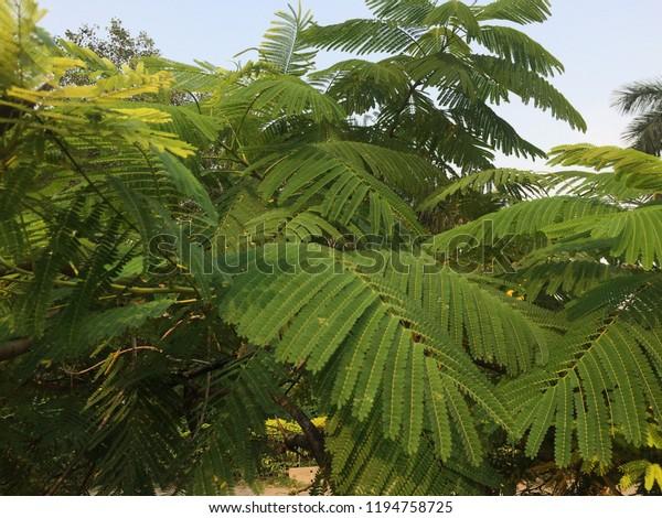 Green Leaves Beautiful Hd Wallpaper Mobile Stock Photo Edit