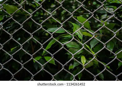Green leaves behind the metal fence