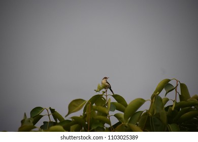 Green leaves with a bird