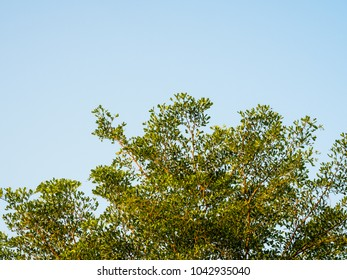 green leaves with blue sky background