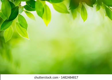 green leaves with blurred green nature background