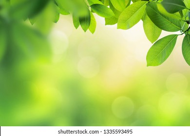 green leaves with bokeh background ;Nature background