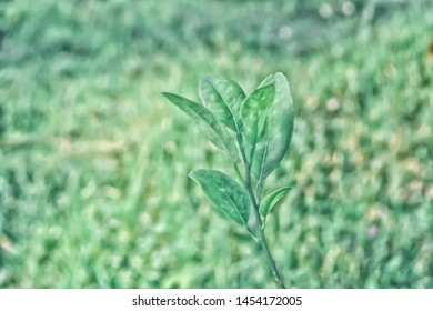 green  leaves  with bokeh light abstract spring nature background
