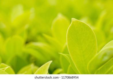 Green leaves, bokeh pattern background