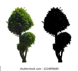 green leaves bonsai tree with black alpha mask isolated on white background.