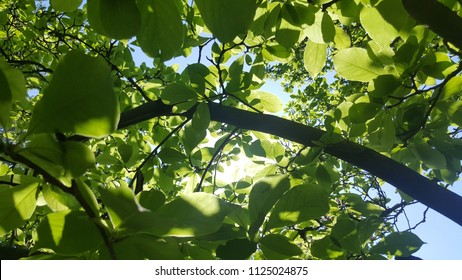 green leaves from bottom up to the sky