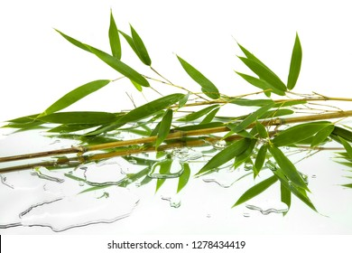 green leaves and branches of bambu reflected in mirror and water drops on white background