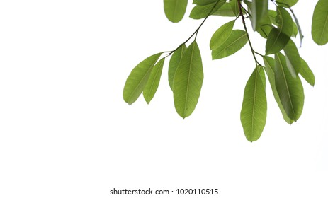 green leaves Branches and copy space