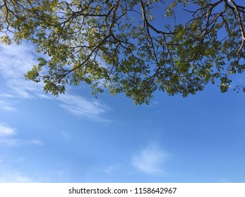 The green leaves and branches is covering the half the frame of this photo shot from the bottom of a tree on a clear day one summer.