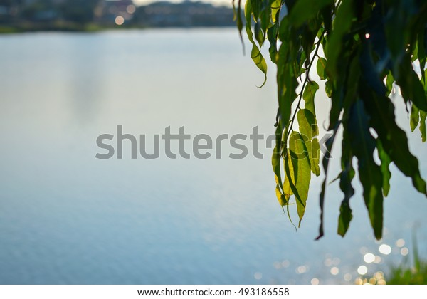 Green leaves and branches near the river in sunny rays