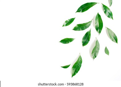 Green leaves, branches on white background. Flat lay, top view. Leaf pattern texture