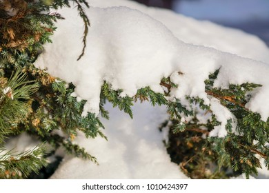 green leaves of a Bush in the sun in winter