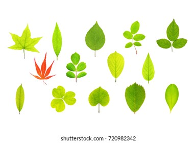 green leaves collage