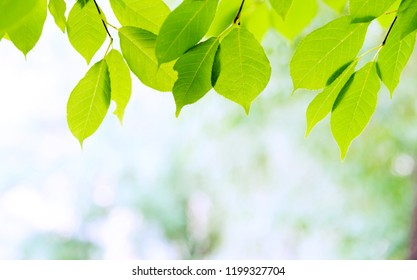 Green leaves with copy space for background.