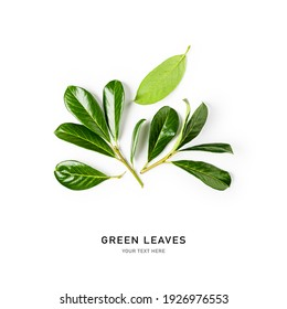 Green leaves creative composition and layout isolated on white background. Floral arrangement with fresh cherry laurel greenery. Nature and environment concept. Top view, flat lay, copy space