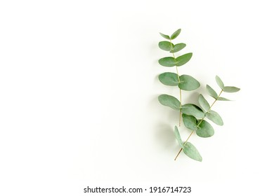 green leaves eucalyptus isolated on white background. flat lay, top view