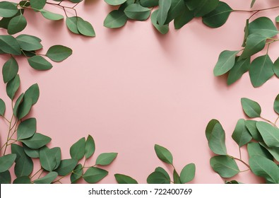 green leaves of eucalyptus tree on bright background