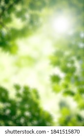 Green leaves to of focus blur background bokeh effect jungle flare natural organic effect light
