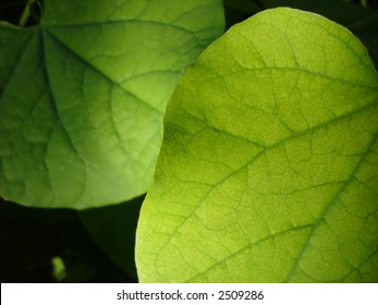 Green leaves with focussed lighting