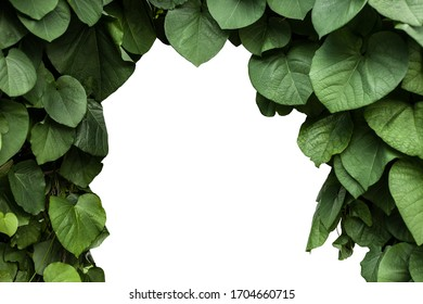 Green leaves foliage frame isolated on white background