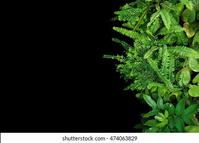 Green leaves forest plants after rain on black background, tropical rainforest concept
