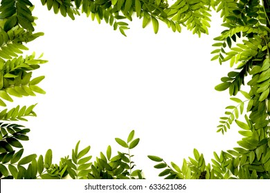 Green leaves frame isolated on white background - overhead view