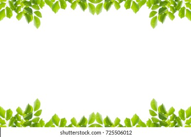 Green leaves frame isolated on white background.