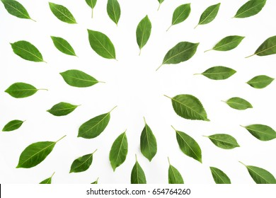 Green leaves as a frame on white paper background. Flat lay