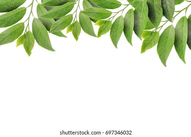 Green leaves as a frame on white paper background