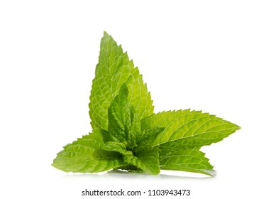 green leaves of fresh mint  isolated on white background