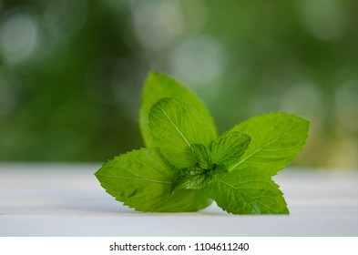 green leaves of fresh mint  isolated on wooden background