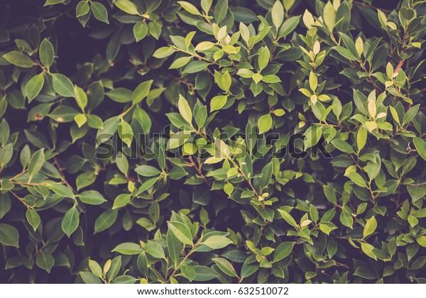 Green leaves garden tree background