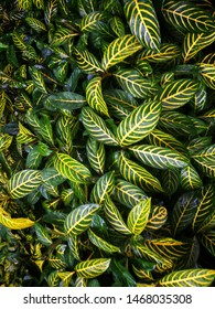 Green leaves in garden,green background