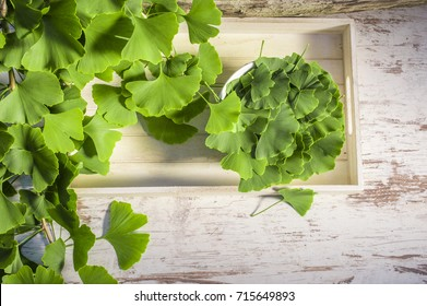Green leaves from a gingo biloba tree on a wooden table