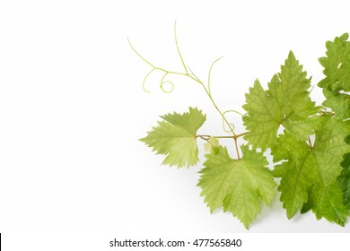 Green leaves of grapes isolated on white