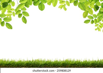 Green leaves and Green grass isolated.