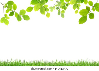 Green leaves and green grass  isolated on white background