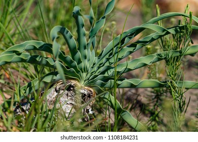 Green leaves growing in Van Stadens Wildflower Reserve