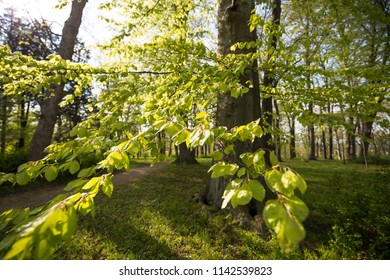 Green leaves hanging on tree Branch