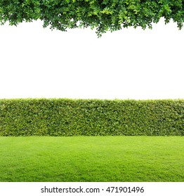 Green leaves and Green hedge isolated.