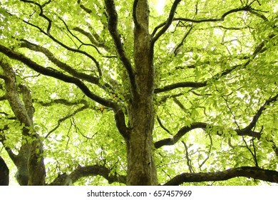 Green leaves highlight the trunk of an old tree.