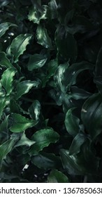 green leaves from homeplant for background