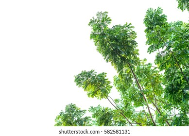 Green leaves isolated background