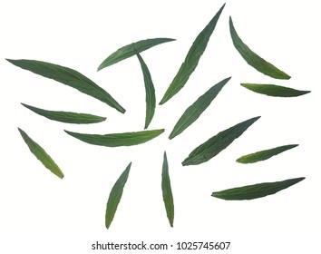 Green leaves isolated from white background